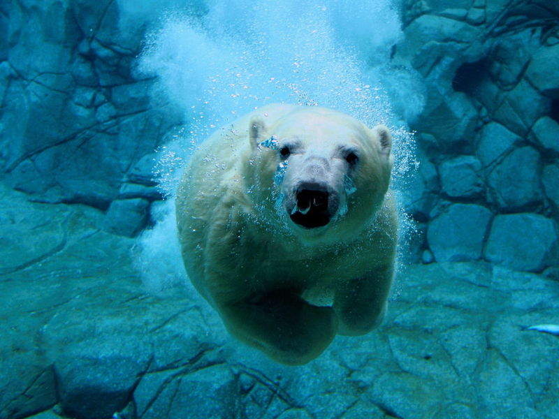 Free Wildlife Pictures Polar Wildlife Free