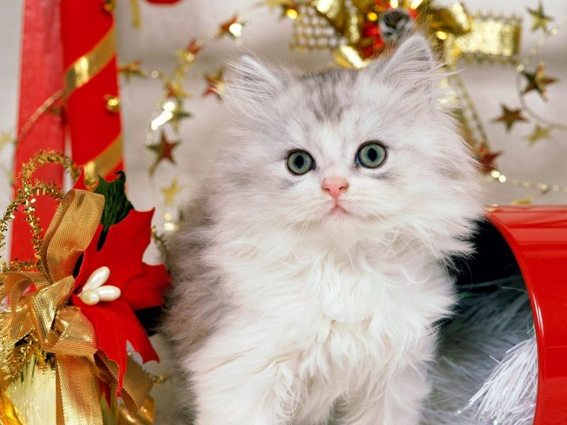 Pretty Kittens Free Screensaver