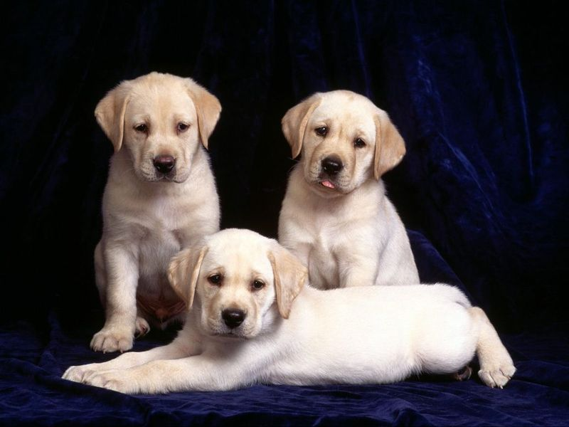 Pretty Puppies Free Screensaver screenshot